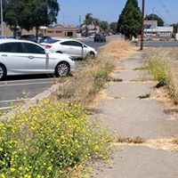 overgrown yard cleanup lompoc